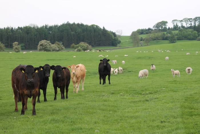 Mixed grazing is one approach to consider to reduce the parasite challenge.