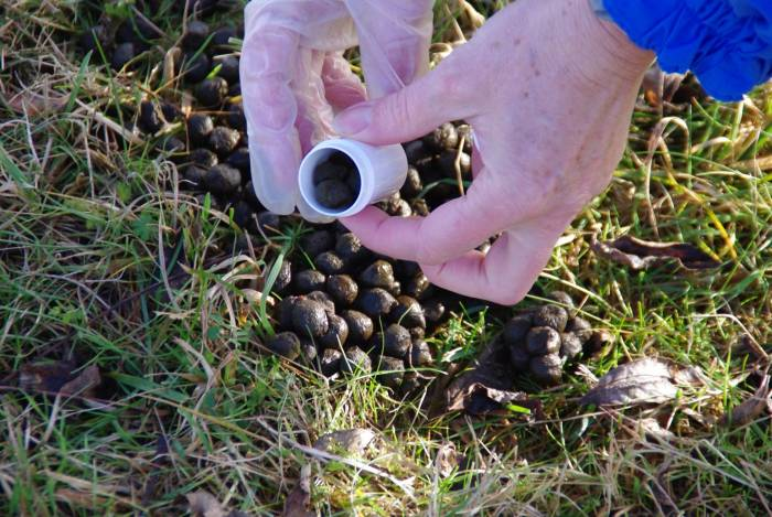 Collecting dung samples before and after using an antelmintic can show how much worm egg counts have reduced by.