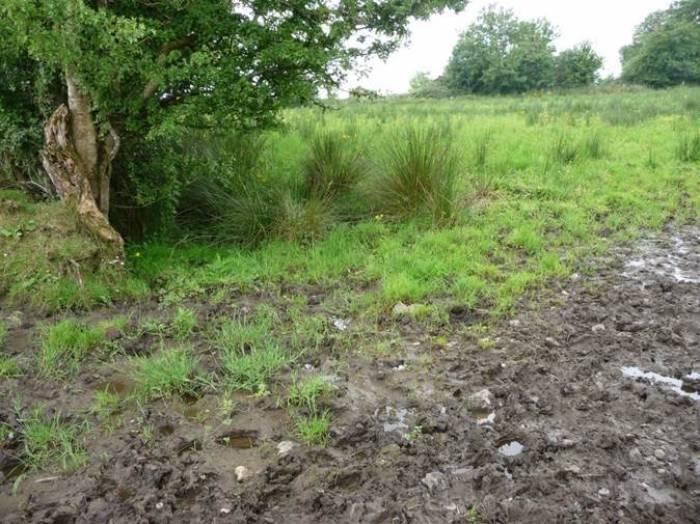 Typical mud snail habitat.