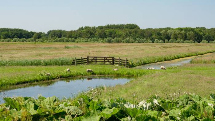 A healthy pasture invertebrate community contributes to natural parasite reduction